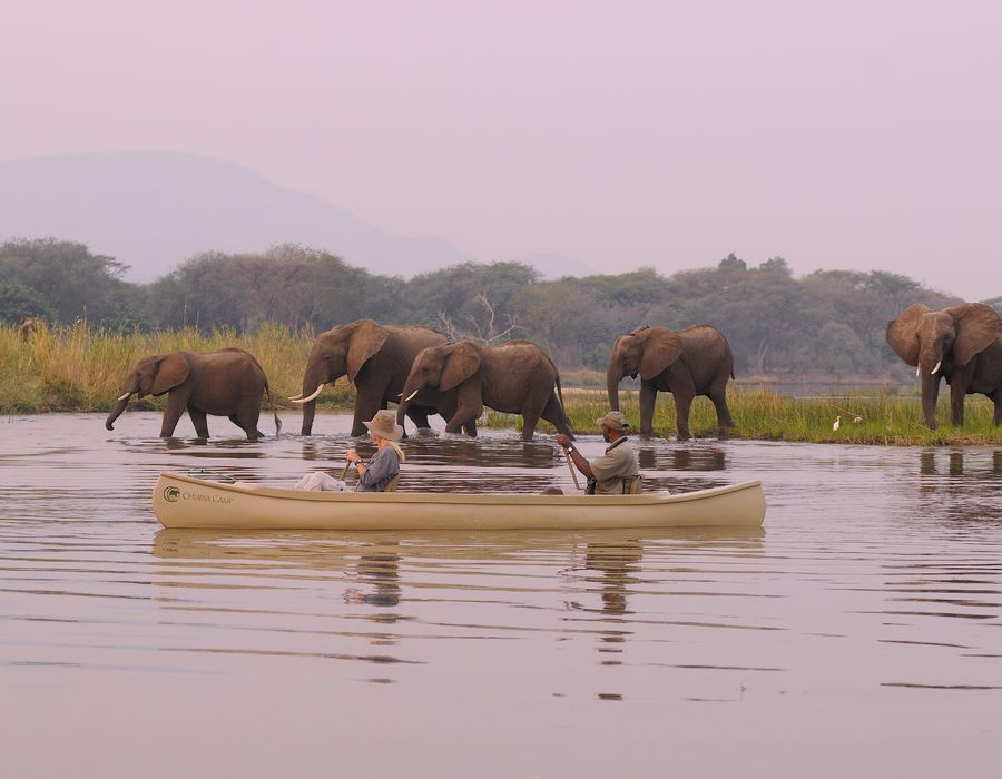 Canoeing on Lower Zambezi with Chiawa Camp