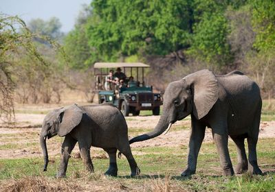 Game Drive - Elephant