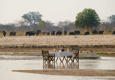 Dining in the Kapamba River