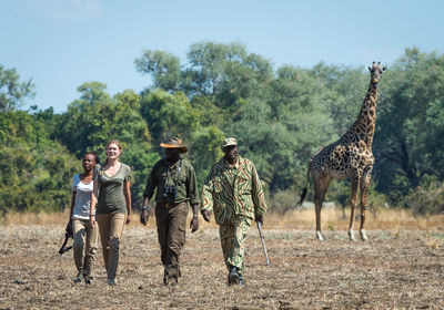 Walking with Giraffe